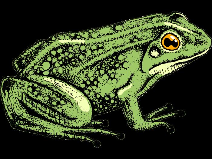 frog_big_complete